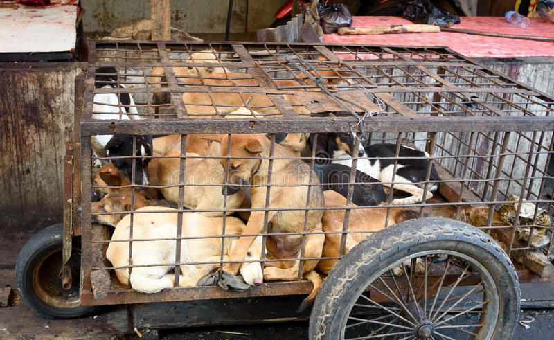 Dogs in cage awaiting slaughter on Tomohon Traditional Market royalty free stock images
