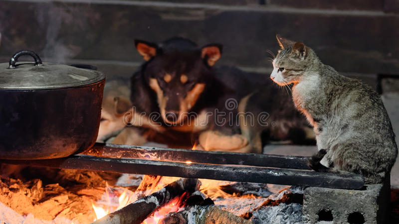 Dogs and cat beside fireplace. A cat and dogs of the Black Hmong people by the cooking fire in a village in Sa Pa valley in Vietnam royalty free stock photo