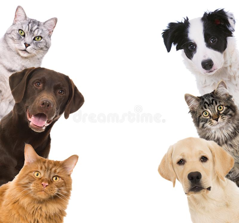 Dogs and cat see sideways in a window. Isolated on white background royalty free stock images