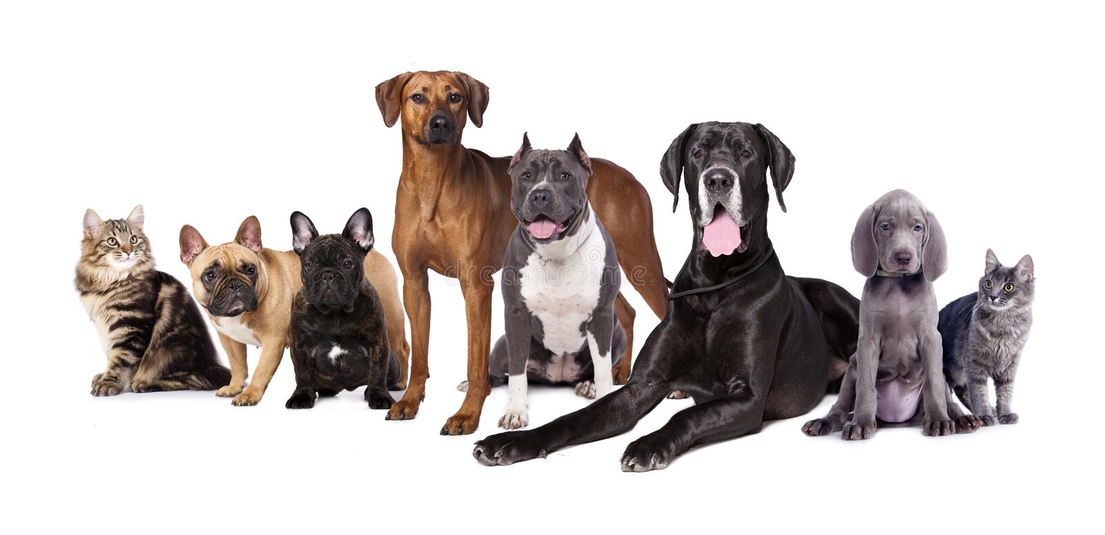 Dogs   and cats. Group of Dogs   and cats on a white background