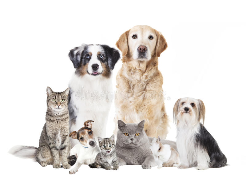Dogs cats isolated. Different dogs and cats against white background, isolated