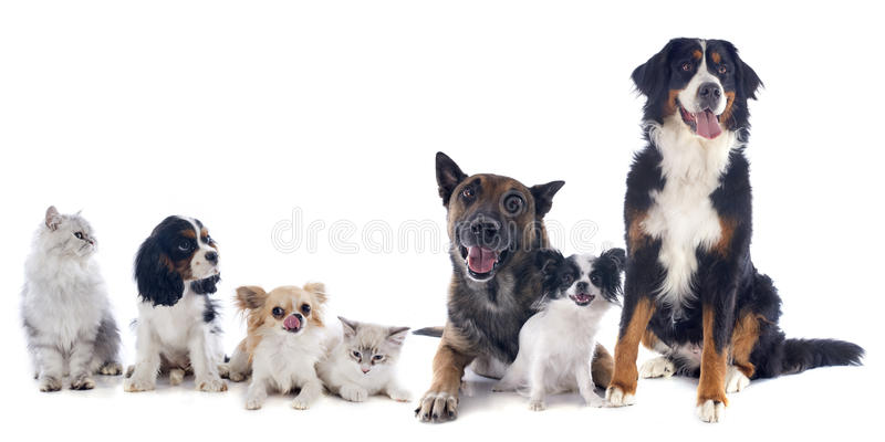 Dogs and cats. Seven dogs and cat in front of white background