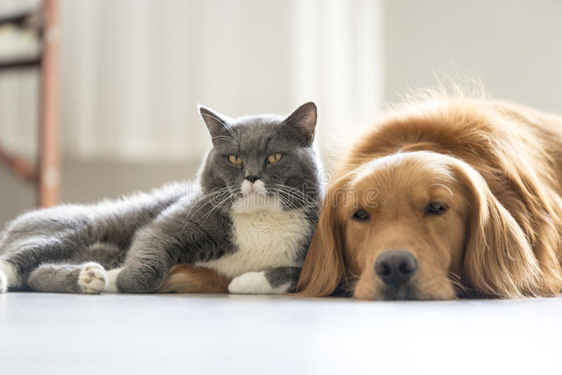 Dogs and cats snuggle together. Indoor shooting