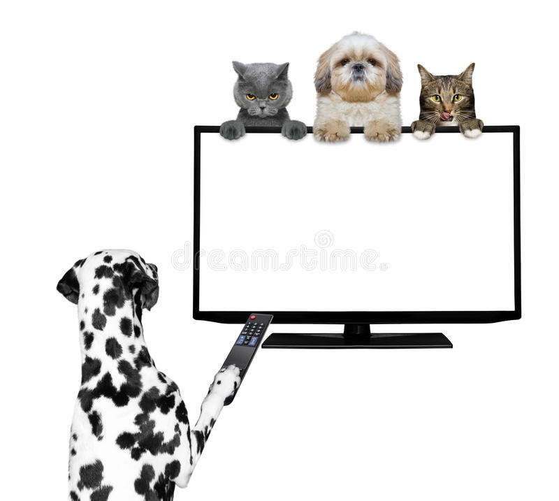 Dogs and cats watching television stock photo