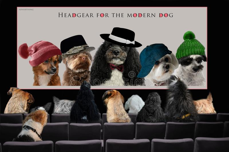 Dogs in cinema watching advertising royalty free stock images