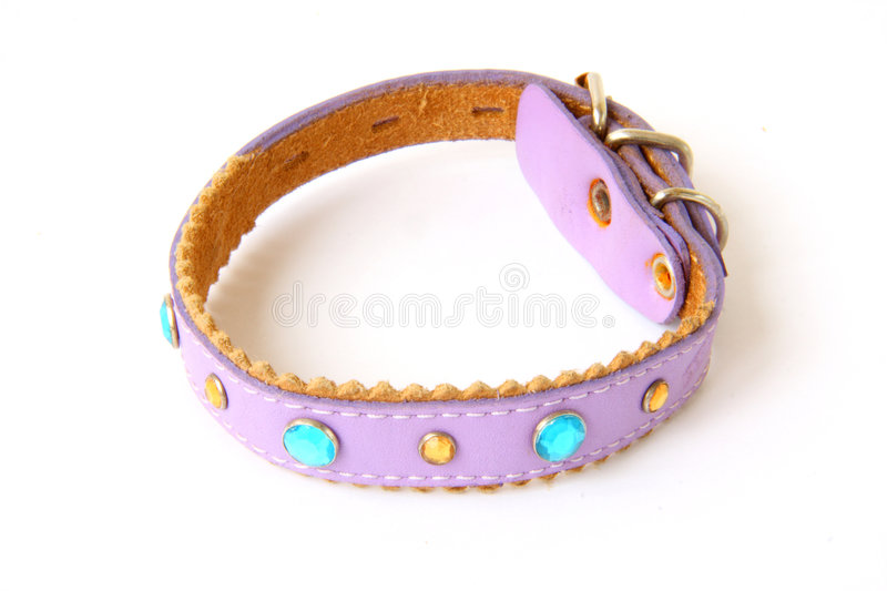 Download Dogs collar stock image. Image of purple, kitty, yellow - 7260877