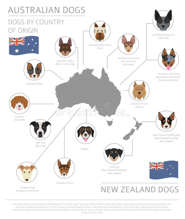Dogs by country of origin. Australian dog breeds, New Zealand do royalty free illustration