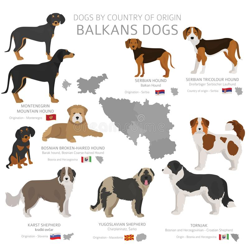 Dogs by country of origin. Balkans dog breeds. Shepherds, hunting, herding, toy, working and service dogs  set. Vector illustration stock illustration