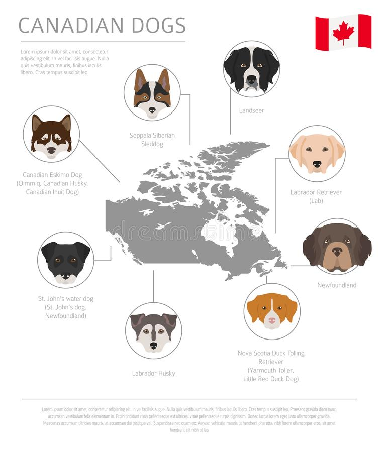 Dogs by country of origin. Canadian dog breeds. Infographic temp. Late. Vector illustration royalty free illustration