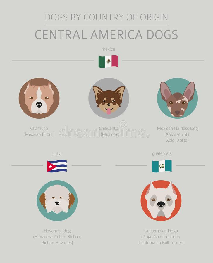 American Dogs Size Comparison Set Cartoon Vector Illustration Stock