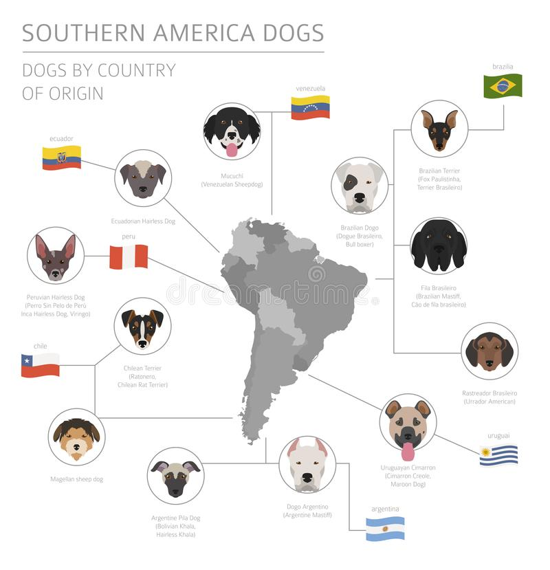 Dogs by country of origin. Latin american dog breeds. Infographic template vector illustration