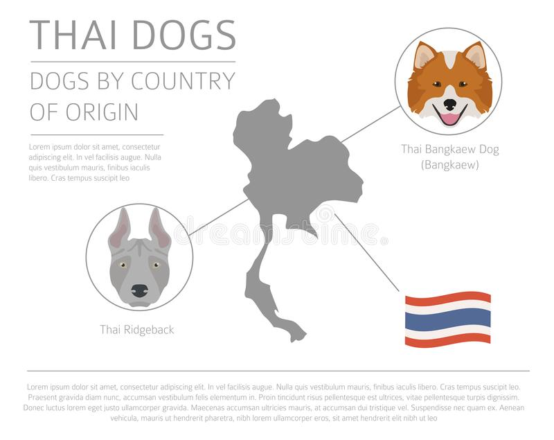 Download Dogs By Country Of Origin. Thai Dog Breeds. Infographic Template  Stock Vector