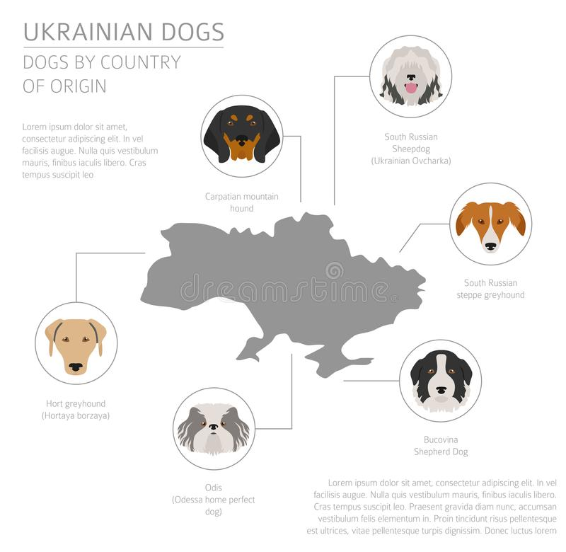 Dogs by country of origin. Ukrainian dog breeds. Infographic template stock illustration