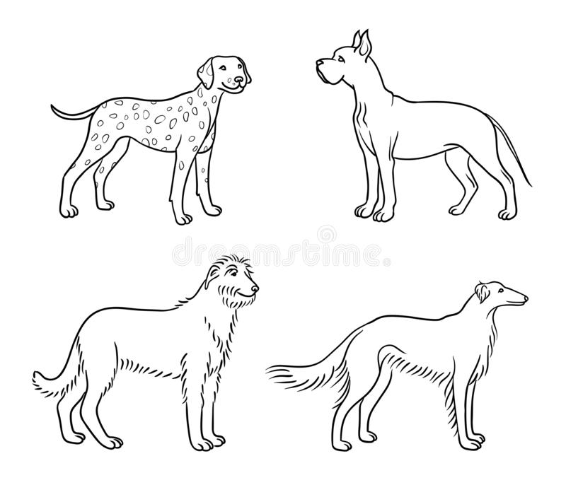 Dogs of different breeds in outlines set3 - vector illustration. Dogs of different breeds in outlines great dane, dalmatian, irish wolfhound, borzoi - vector vector illustration