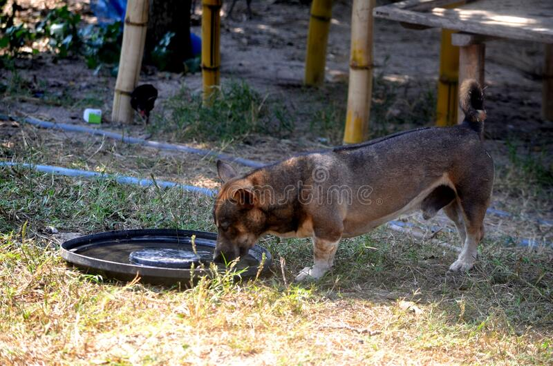 Dogs eat water. Dogs eat water in the trough to feed the animals royalty free stock image