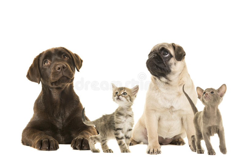 Dogs en young cats looking up royalty free stock photos