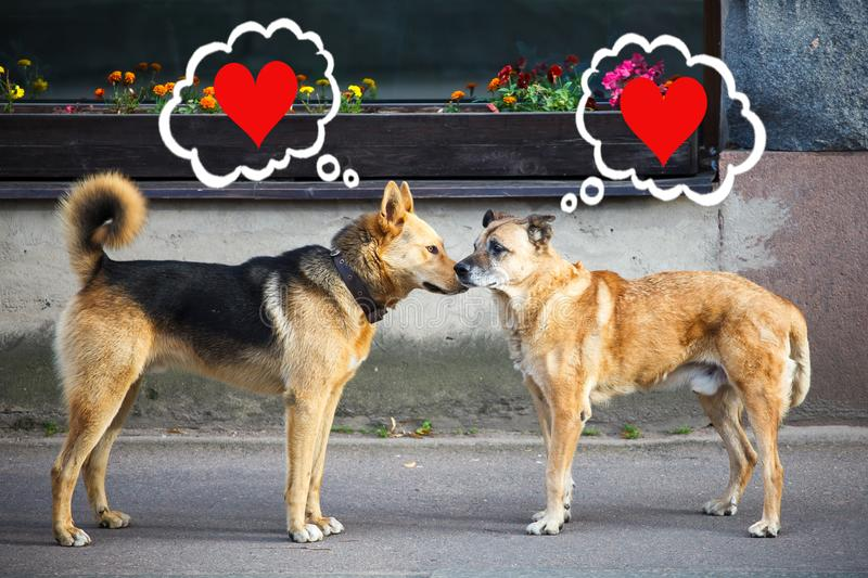 Dogs face to face and think of love stock photography