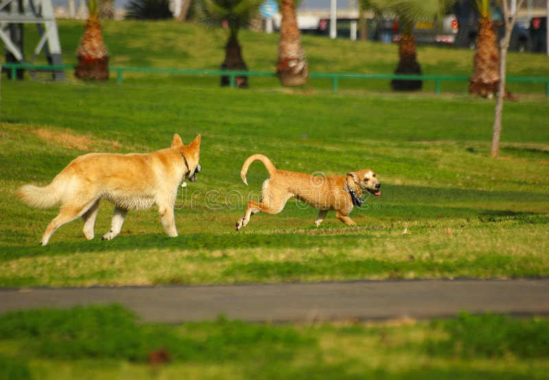 Dogs fight royalty free stock photography