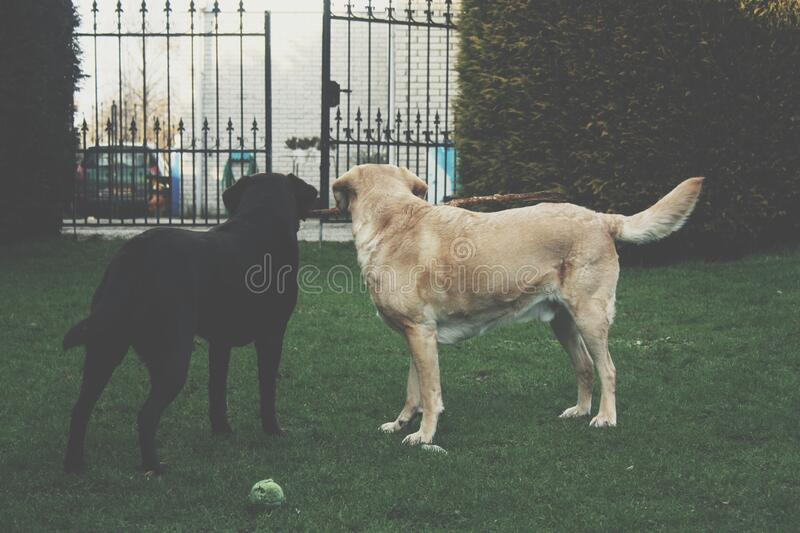 Dogs in garden royalty free stock photo