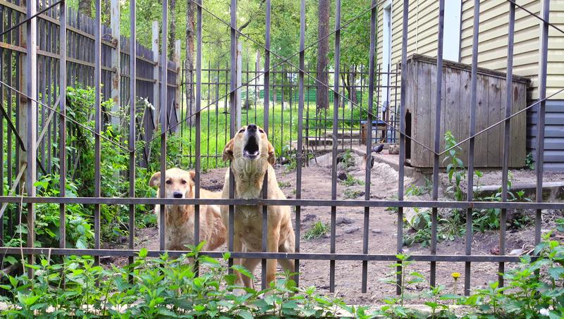 Dogs guard the house, pets. Dogs and fence. Dogs guard the house, pets stock images