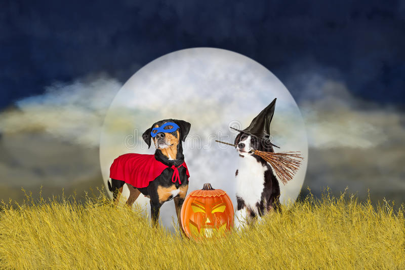 Dogs in Halloween Costumes at Night royalty free stock images
