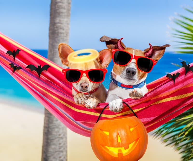 Dogs on hammock on halloween stock photo