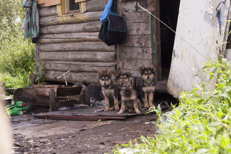 dogs hemlös husdjur Hundkapplöpningen går på gatan Hunden har förlorat dess ägare fotografering för bildbyråer