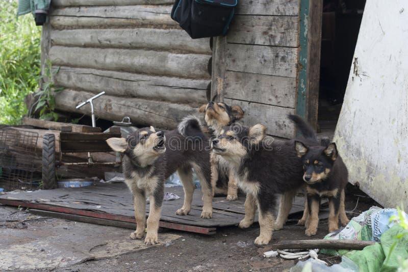 dogs hemlös husdjur Hundkapplöpningen går på gatan Hunden har förlorat dess ägare royaltyfri foto