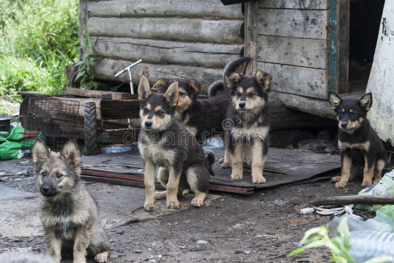 dogs hemlös husdjur Hundkapplöpningen går på gatan Hunden har förlorat dess ägare arkivfoton