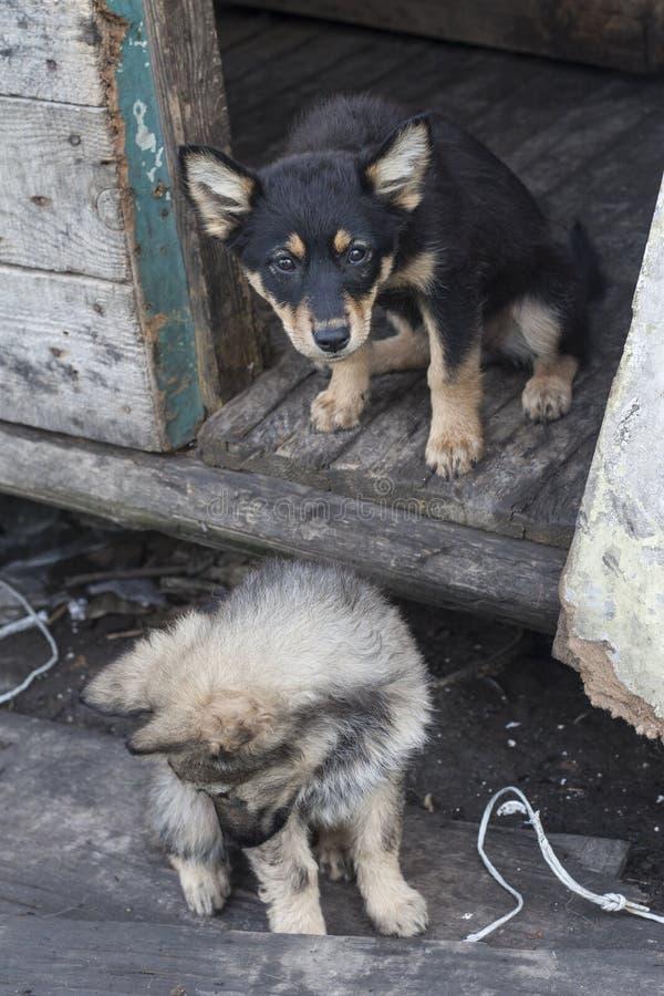 dogs hemlös husdjur Hundkapplöpningen går på gatan Hunden har förlorat dess ägare royaltyfri fotografi