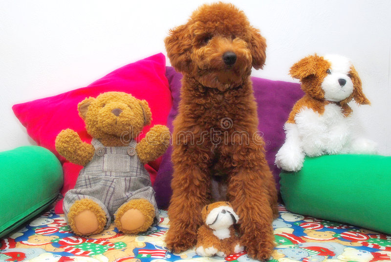 Dogs and its friends royalty free stock photography