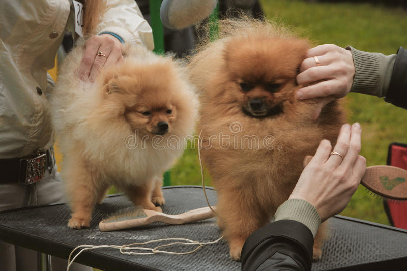 dogs kvinnor royaltyfria bilder