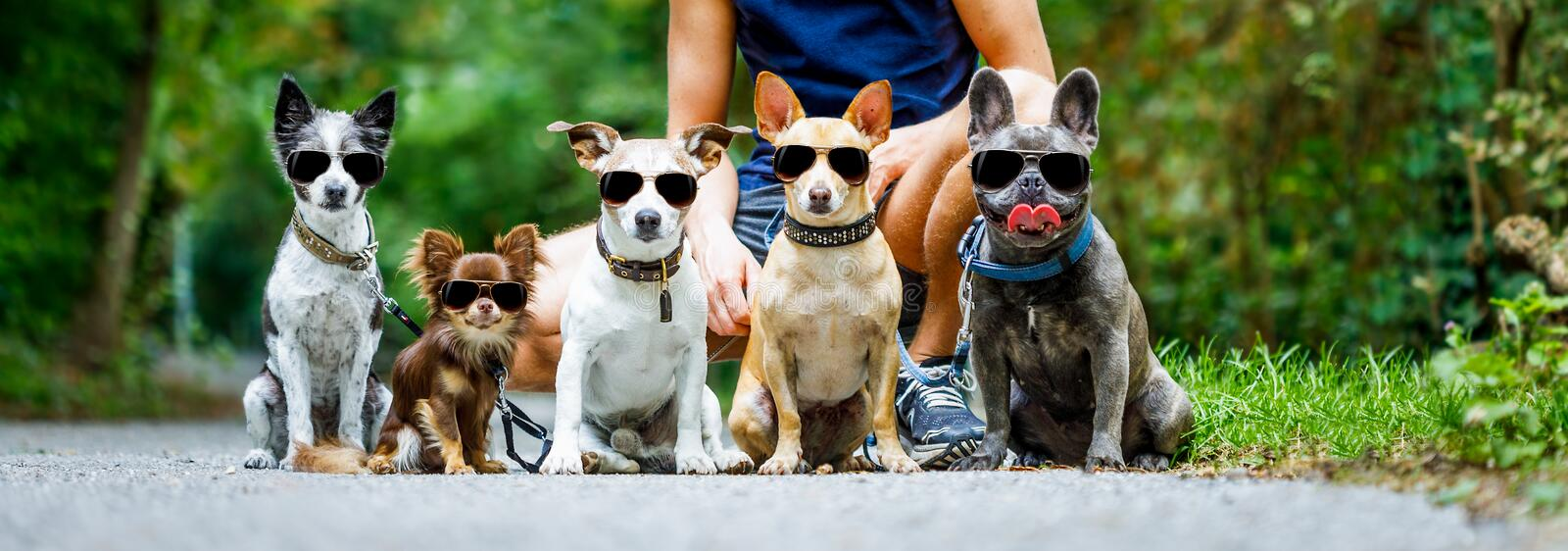 Dogs with leash and owner ready to go for a walk royalty free stock photo