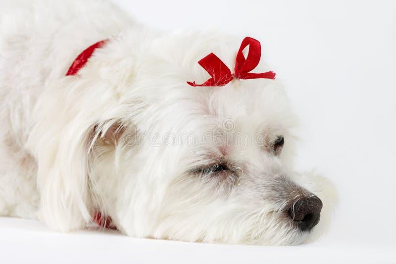 dogs livstid arkivfoto