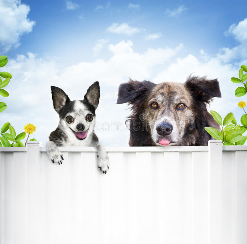 Free Dogs Looking Over Fence Royalty Free Stock Images - 15290019
