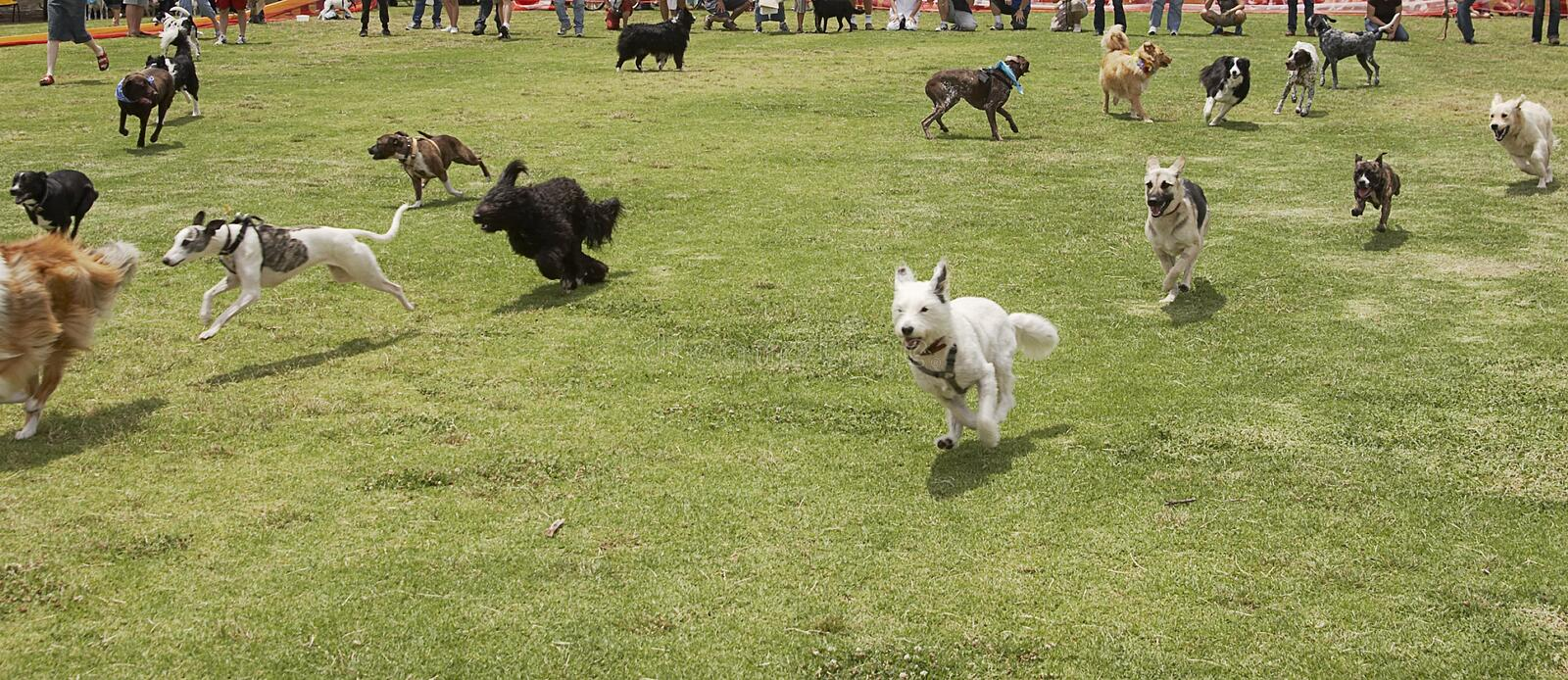 The Dogs Are Loose royalty free stock photos