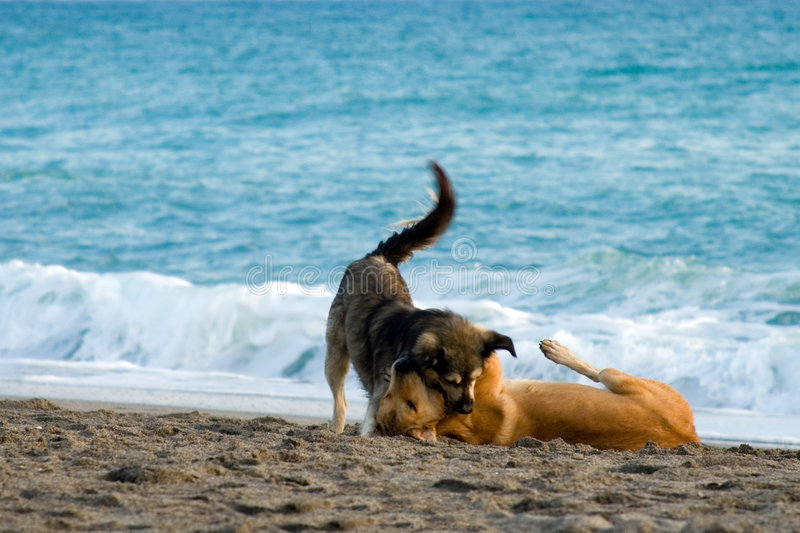 Dogs in love stock photos