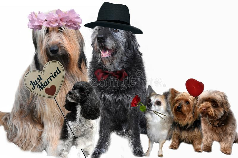 Dogs in love. just married couple and guests royalty free stock images