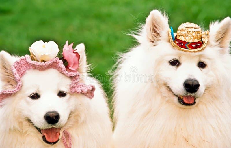dogs lyckliga två royaltyfria foton