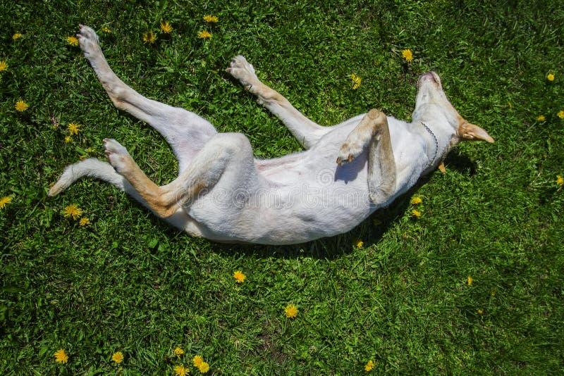 dogs lyckligt royaltyfria foton