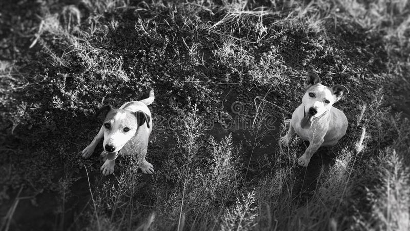 dogs lyckligt arkivbilder
