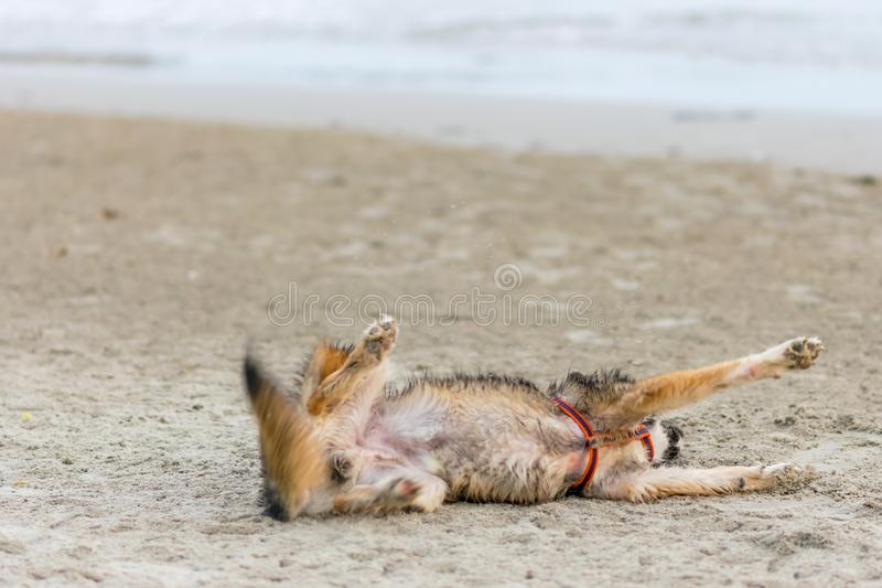 The dog is lying on the beach. royalty free stock photos