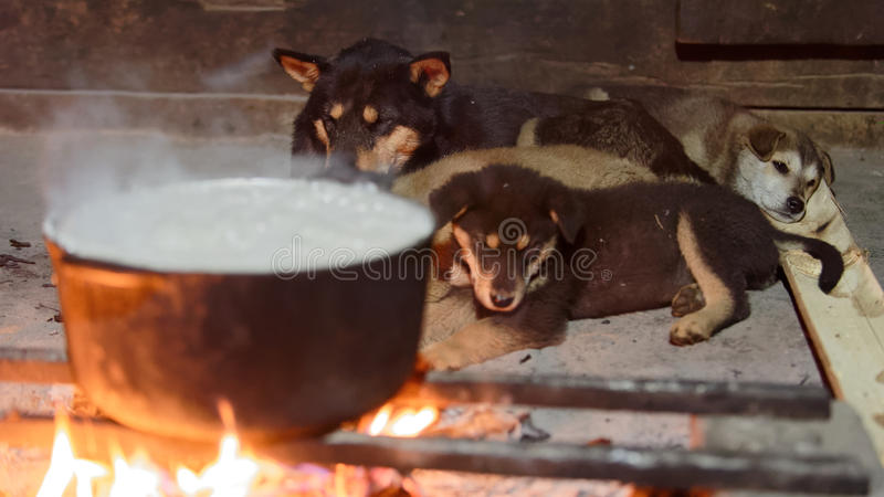Dogs lying next to cooking fire in Sa Pa valley stock image
