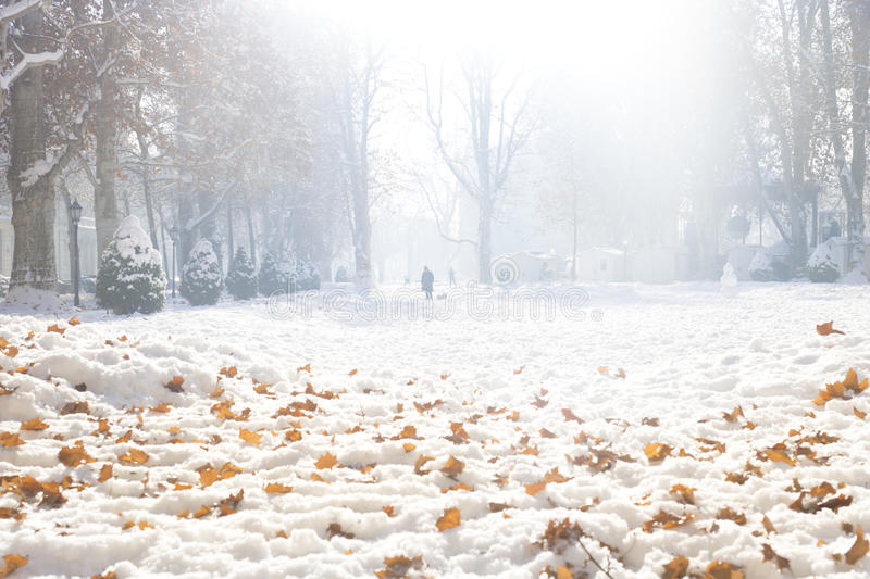 Dogs out. Winter scenery in a park in Zagreb, Croatia royalty free stock image
