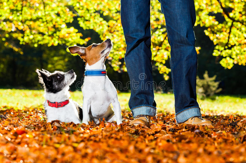 Dogs and owner stock photos