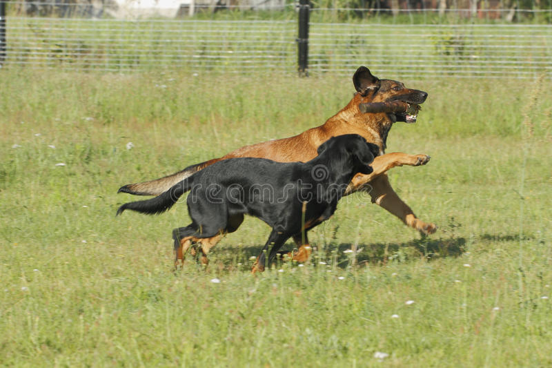 Download Dogs Stock Images - Image: 33040384