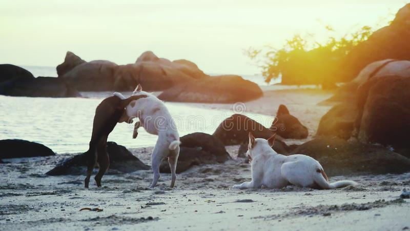 Dogs playing on the shore of the sea at beautiful sunset. royalty free stock photos