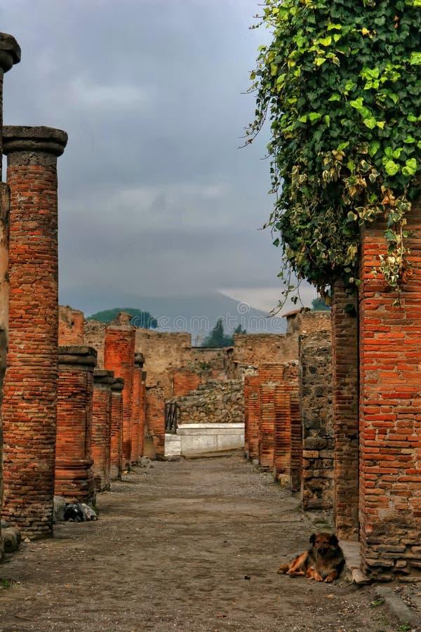 dogs pompeii royaltyfri foto