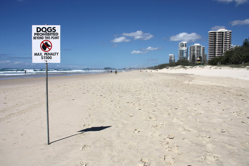 Dogs prohibited. Beach in Australia - sandy beach in Surfers Paradise, Gold Coast, Queensland. Dogs prohibited, high penalty royalty free stock photos