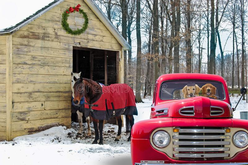 Dogs in retro red truck by horses stock photo